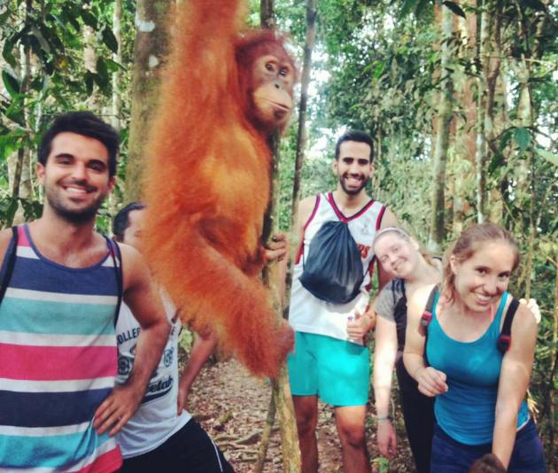 orangutanes en bukit lawang.jpg
